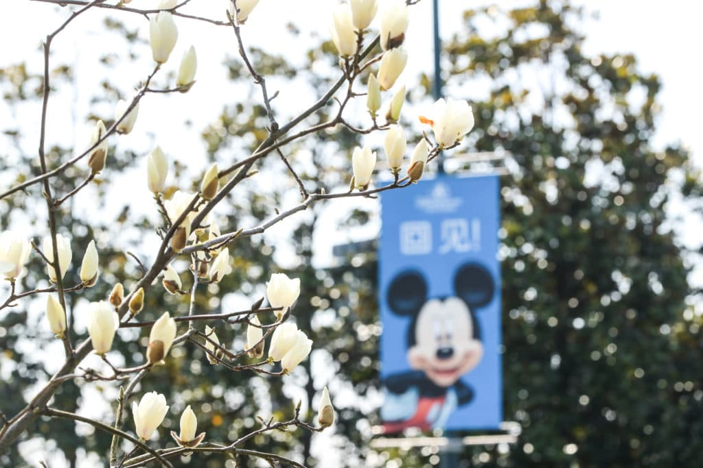 Shanghai Disney Resort First Spring Season